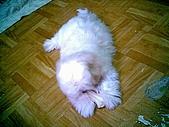 布丁1(2007~2009):布丁第3次洗澡44