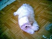 布丁1(2007~2009):布丁第3次洗澡46