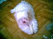 布丁1(2007~2009):布丁第3次洗澡48