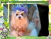 布丁1(2007~2009):布丁生日26.jpg