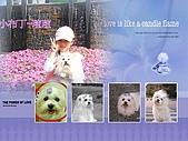 布丁1(2007~2009):布丁4連拍 (22).jpg