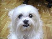 布丁1(2007~2009):布丁4連拍 (23).JPG