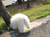 布丁1(2007~2009):照片 149.jpg