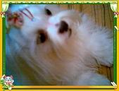 布丁1(2007~2009):布丁拔捐血3