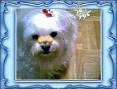 布丁1(2007~2009):福來4