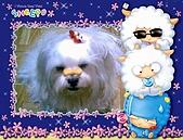 布丁1(2007~2009):福來5