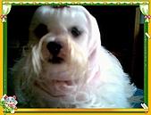 布丁1(2007~2009):粉紅帽布丁1