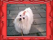 布丁1(2007~2009):布丁拔捐血8