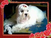 布丁1(2007~2009):粉紅帽布丁2