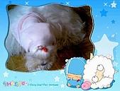 布丁1(2007~2009):粉紅帽布丁4
