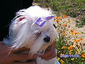 布丁1(2007~2009):照片 017.jpg