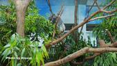 2018.06.30 台北市立動物園,福德坑環保公園滑草:L1240494.JPG