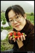 2008.04.04 大湖採草莓:_IGP3869.jpg