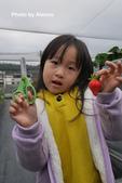 2016.02.21 草莓達人の高貴草莓:P1350384.JPG