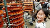 2018.11.18 新埔味衛佳柿餅觀光農場:L1240644.JPG