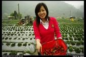 2008.04.04 大湖採草莓:_IGP3873.jpg
