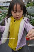 2016.02.21 草莓達人の高貴草莓:P1350380.JPG