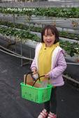 2016.02.21 草莓達人の高貴草莓:DSC_9115.JPG