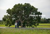2020.02.02 芎林金城武樹,鹿鳴坑觀光果園採柑橘:P1330402.JPG