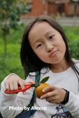 2020.02.02 芎林金城武樹,鹿鳴坑觀光果園採柑橘:P1330422.JPG