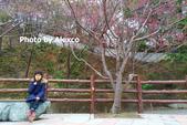 2020.02.09 苗栗協雲宮,山櫻花步道:IMG_20200209_120043_1.jpg