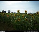 2008.08.23 向陽農場,星海之戀:IMGP0196.jpg