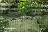 2018.06.30 台北市立動物園,福德坑環保公園滑草:L1240254.JPG
