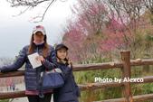 2020.02.09 苗栗協雲宮,山櫻花步道:P1330523.JPG