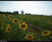 2008.08.23 向陽農場,星海之戀:IMGP0200.jpg