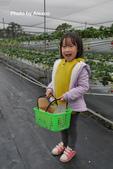 2016.02.21 草莓達人の高貴草莓:P1350372.JPG