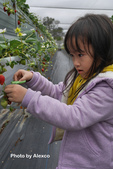 2016.02.21 草莓達人の高貴草莓:P1350378.JPG