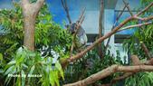 2018.06.30 台北市立動物園,福德坑環保公園滑草:L1240495.JPG
