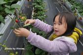 2016.02.21 草莓達人の高貴草莓:P1350402.JPG