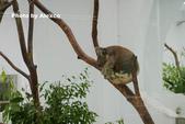 2018.06.30 台北市立動物園,福德坑環保公園滑草:L1240473.JPG