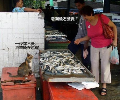 超跩的魚店貓老闆- LUCI的創作- 巴哈姆特