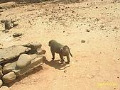北台灣風景圖片:猴子