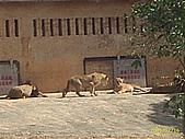 北台灣風景圖片:獅子