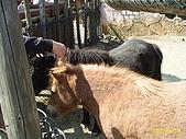 北台灣風景圖片:馬