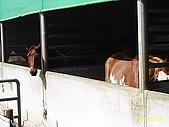 北台灣風景圖片:馬房