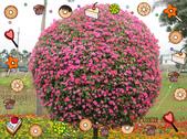 Xuite活動投稿相簿:可愛的大頭花