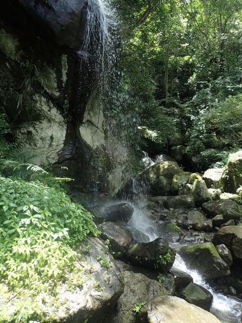 P6210817.JPG - 再訪  關西  馬武督探索森林