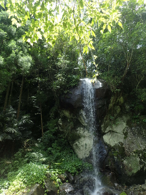 P6210818.JPG - 再訪  關西  馬武督探索森林