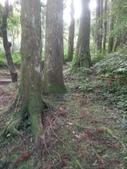 復興  東眼山森林步道:DSC_8948.JPG