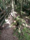 復興  東眼山森林步道:DSC_8951.JPG