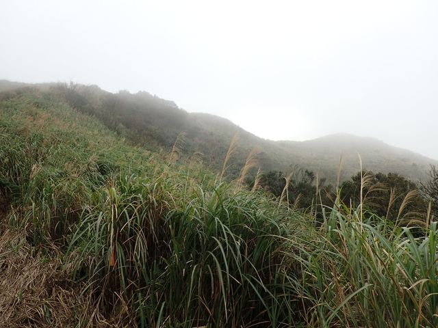P1203505.JPG - 瑞芳  牡丹山