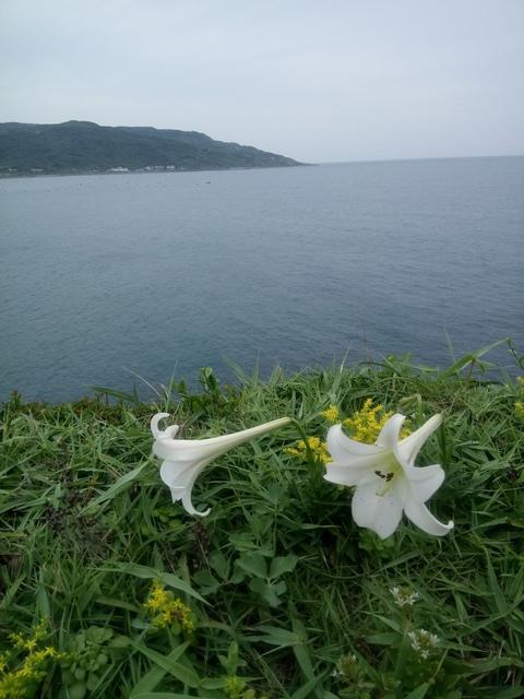 DSC_1182.JPG - 金山  磺港岬角  秘徑