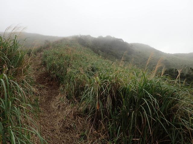 P1203506.JPG - 瑞芳  牡丹山
