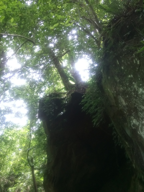 DSC_4150.JPG - 再訪  關西  馬武督探索森林