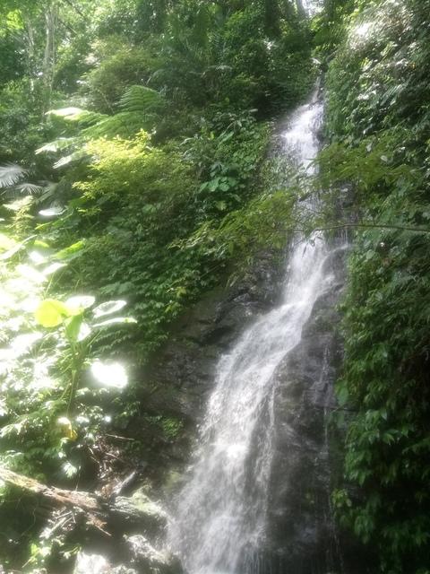 DSC_4164.JPG - 再訪  關西  馬武督探索森林