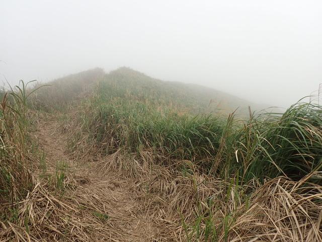 P1203498.JPG - 瑞芳  牡丹山